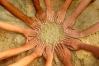 Aufbruch in eine multidimensionale Gemeinschaft