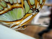 butterfly-218548