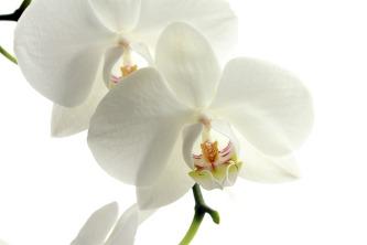 flower-179004
