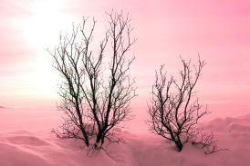 trees-242935