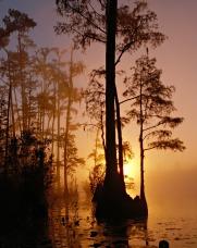okefenokee-swamp-86611