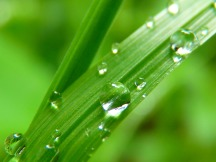 drop-of-water-7720_1280