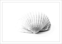 shell-317395_1280