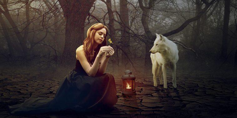 wolf-1594637_1920