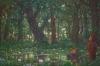 Die Wälder meiner Träume und der kleineTroll