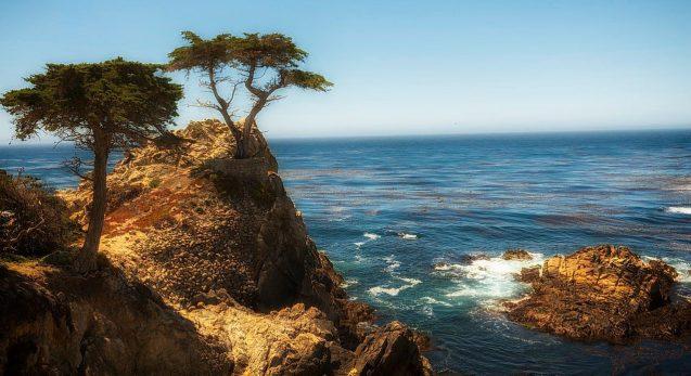 cypress-tree-849636_1280